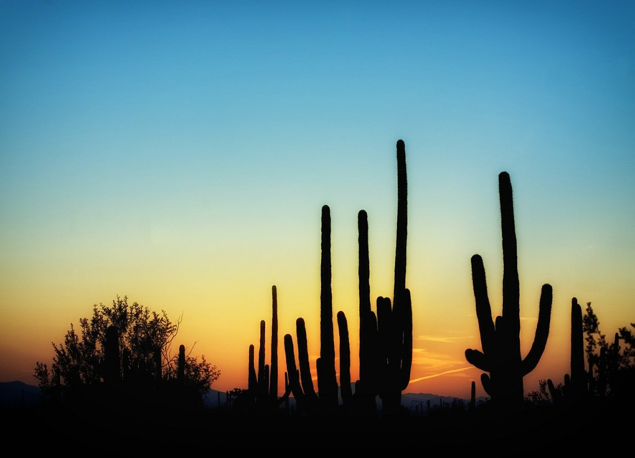 Top Healthy Activities To Do in Scottsdale in March