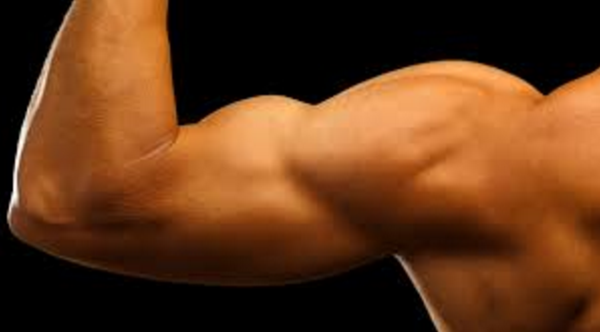 Best Biceps Exercises for Muscle Growth